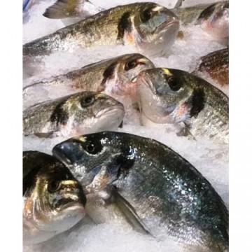 Taze Balık - Çipura 400/600 gr KG
