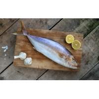 Akya (Kuzu) Balığı