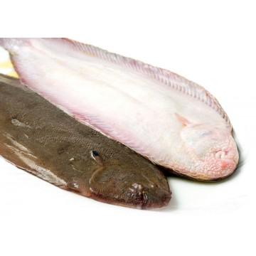 Dil Balığı Kg