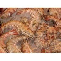 Karabiga (black tiger) Kaplan Karides (shrimp)