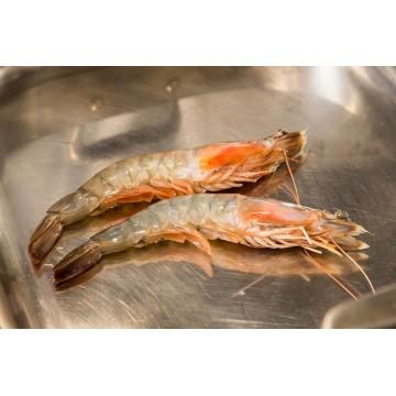 Taze Balık - Karides Jumbo İri (13 - 15 adet)